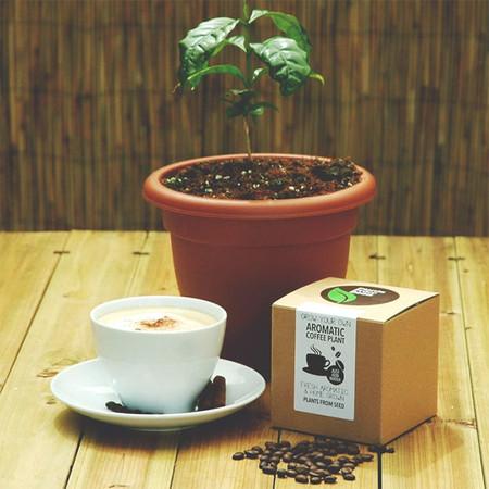 Planta Cafe