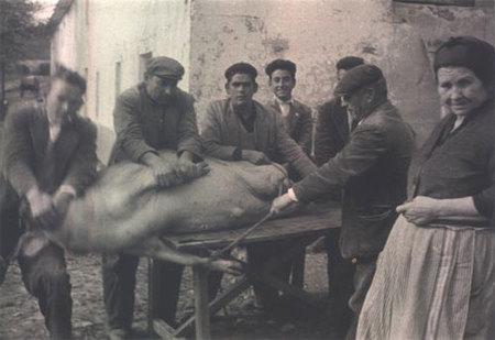 Curioso producto turístico: matanza de cerdos en Extremadura