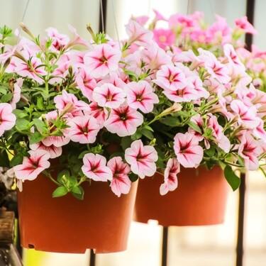 13 flores y plantas para que tu terraza o balcón sea un auténtico vergel (y además, son muy fáciles de cuidar)