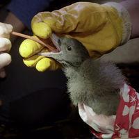 El documental de la BBC que está convenciendo a los británicos del dramático peligro del plástico