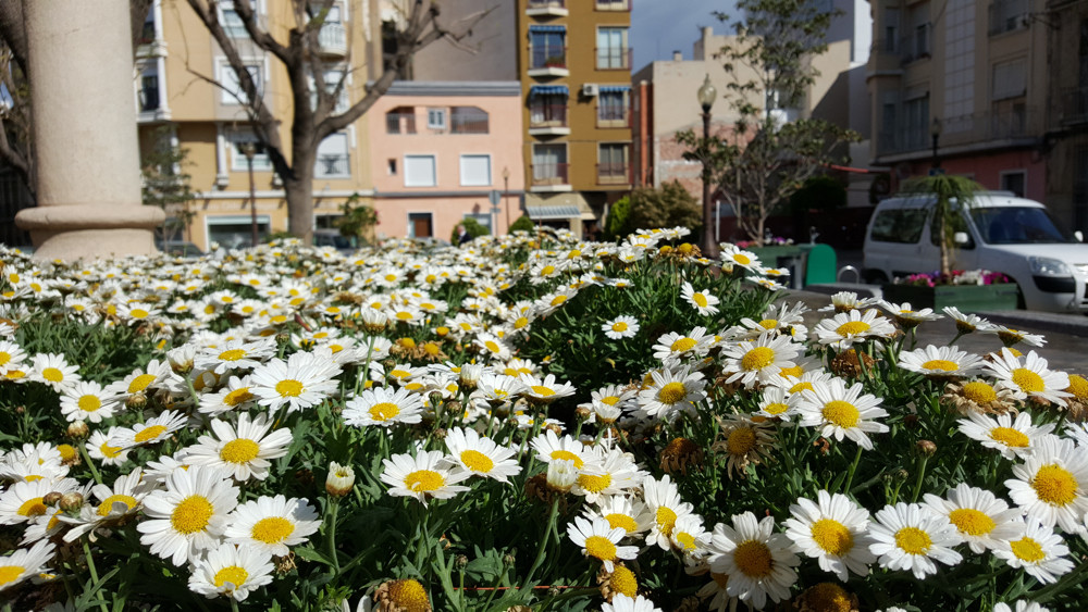 S6 Flores Dia