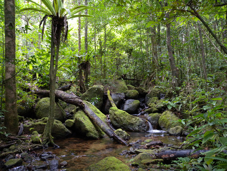 Lowland Rainforest Masoala National Park Madagascar 4026784053