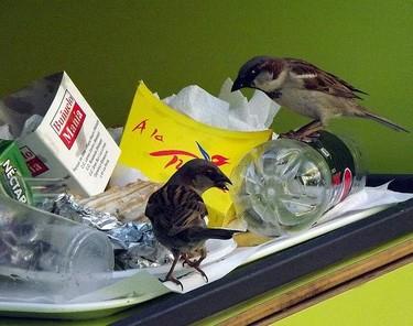 Reflexiones sobre el desperdicio de alimentos en el hogar