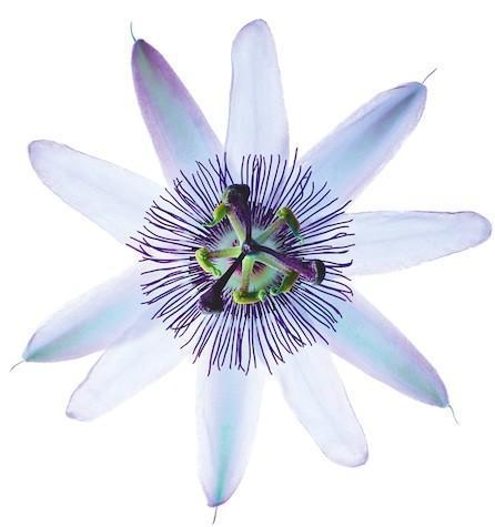 Nuxe Flor