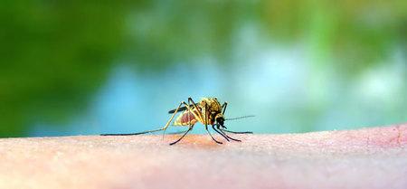 Consejos para quienes viajen a zonas con dengue