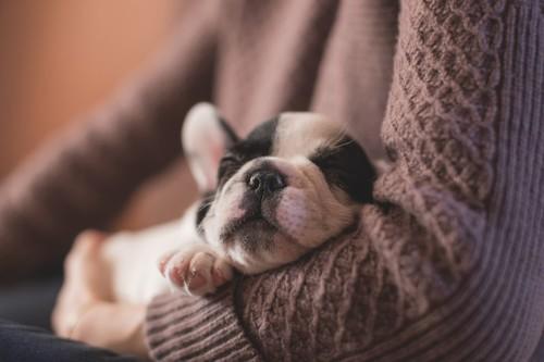Cómo disfrutar de los perros si no puedes tener uno