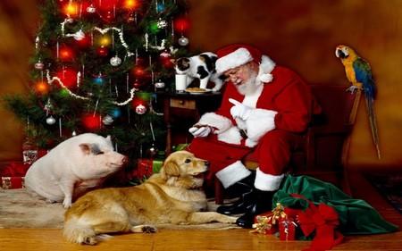 Regalos para tus mascotas estas navidades en varias tiendas online para animales
