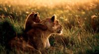 ¿Cuándo recibirá Mountain Lion sus primeras actualizaciones?
