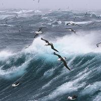 Albatros contra la pesca ilegal: así les hemos reclutando para que patrullen los océanos