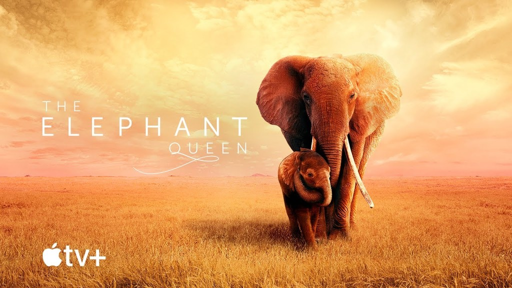 Apple comparte un primer trailer de 'The Elephant Queen': asistirá a Apple™ TV+ el uno de noviembre