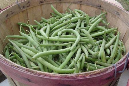 Judías: excelente fuente de calcio en el mundo vegetal