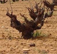 Reforma del sector vitivinícola europeo, acuerdo alcanzado pero no muy bien recibido