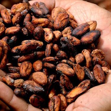 Estos son los 16 ingredientes 100 por ciento mexicanos que tienen denominación de origen
