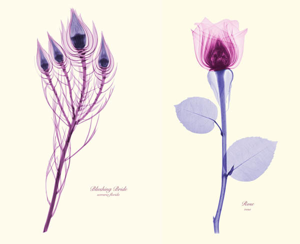 X ray flowers by Brendan Fitzpatrick