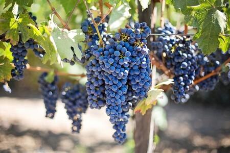 Que Fruta De Temporada Hay En Octubre Y Como Aprovecharla Uvas
