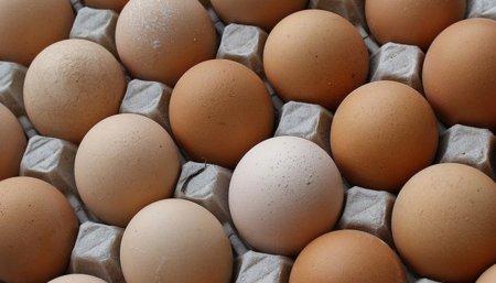 Los huevos ayudan a perder peso además de ser una buena fuente de proteínas