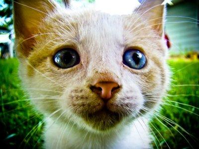 Aoshima, la isla japonesa donde hay seis veces más gatos que personas