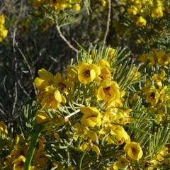 Foto 22 de 22 de la galería colores-del-gran-desierto-de-victoria en Xataka Ciencia