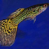 Algunos peces tienen una personalidad compleja