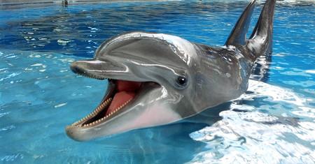 Aquella vez que intentamos enseñar inglés a un delfín, le hicimos pajas y se terminó suicidando por amor