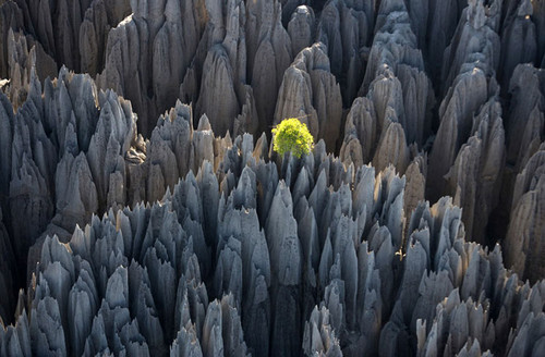 Foto de La tierra desde el cielo - © Yann Arthus-Bertrand (28/37)