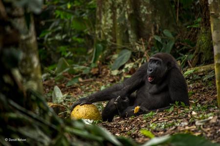 The Good Life Daniel Nelson Wildlife Photographer Of The