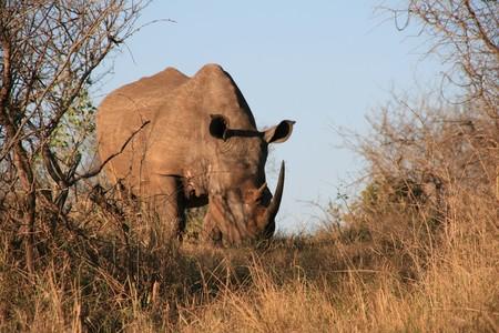 Rhino 1077906 1280