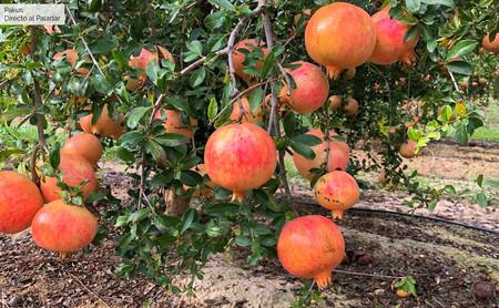 Granada, la fruta con propiedades antioxidantes que está de plena temporada (y siete recetas para usarla en cocina)