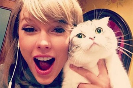 Taylor Swift Cat Main
