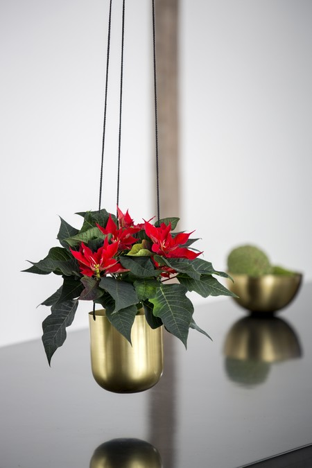 2016 Poinsettia Jarrn Dorado Colgante Es