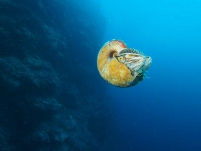 Esta imagen es única porque el caracol marino que aparece en ella llevaba 30 años sin verse