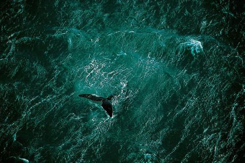 Foto de La tierra desde el cielo - © Yann Arthus-Bertrand (24/37)