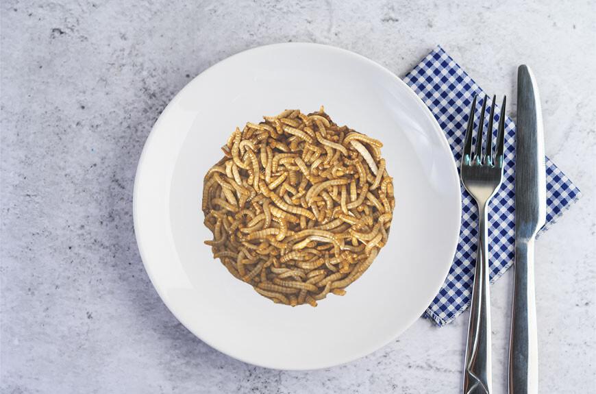 El gusano de la harina es el primer insecto que recibe el visto bueno de la EFSA como alimento seguro: a la rica proteína con larvas
