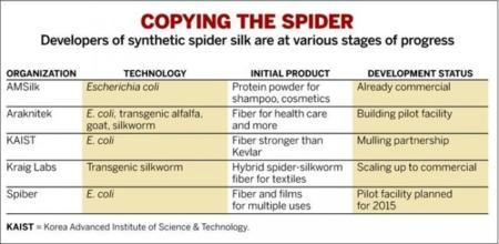 Desarrollo de seda de araña