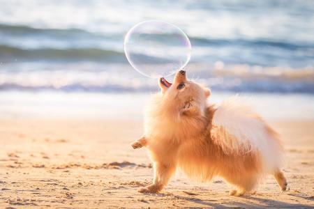 Estas son las mejores fotografías de perros según el certamen Dog Photographer of the Year 2018