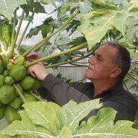Son españoles, consiguieron que se plantara aguacate hasta en Galicia y ahora están cultivando cacao y café por primera vez en Europa
