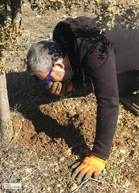 oliendo tierra para buscar trufas