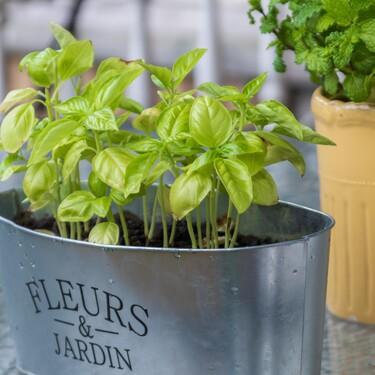 Cómo montar un huerto de plantas aromáticas en balcones o terrazas
