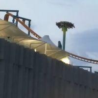 'Patatús' el juego mecánico de Kataplum! se atascó y dejo a usuarios de cabeza en Ciudad de México