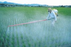 Los pesticidas invaden nuestro organismo mediante la alimentación
