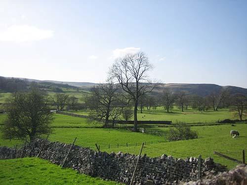 Foto de Verde Yorkshire (2/8)