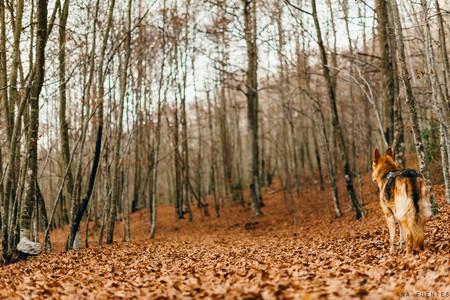 Montseny otoño
