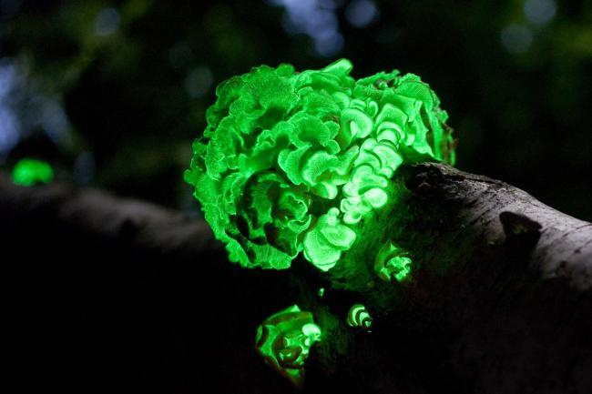 Estas plantas que brillan en la oscuridad quieren echar raíces en tu jardín