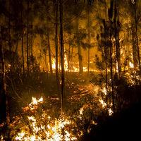 Ni en Galicia ni en el resto de España hay una ley que permita recalificar suelo quemado tras un incendio