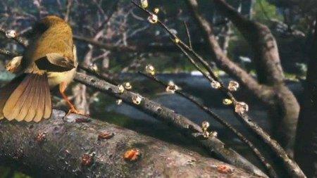 bird wiiu