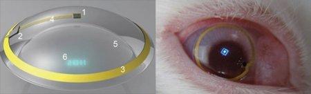 Realidad Aumentada en lentes de contacto, primeras pruebas con conejos