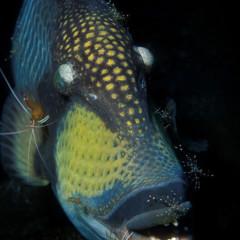 Foto 13 de 34 de la galería underwater-competition en Xataka Foto