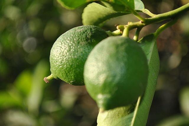 zumo de limon valor nutricional