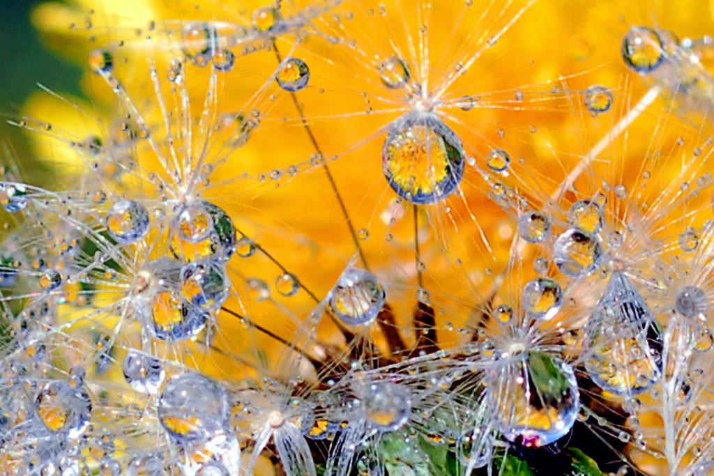 La belleza de una gota de agua