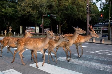 Planet Deer Yoko Ishii 15